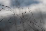 Skygrass 4