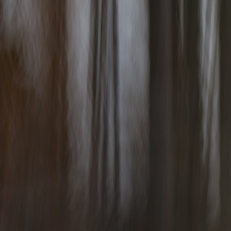 Abstract photo of tree woods