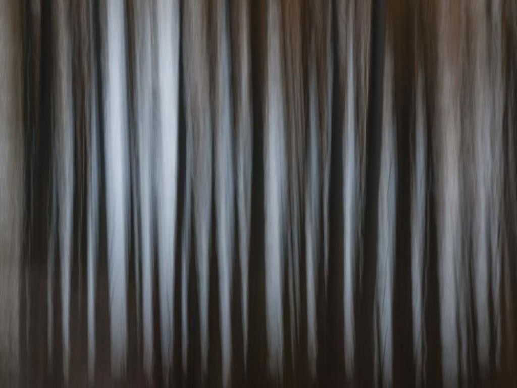 Photo of trees in dark forest