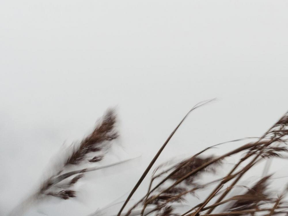 Photo of grasses and sky
