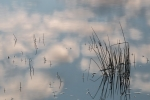 Watergrass 2