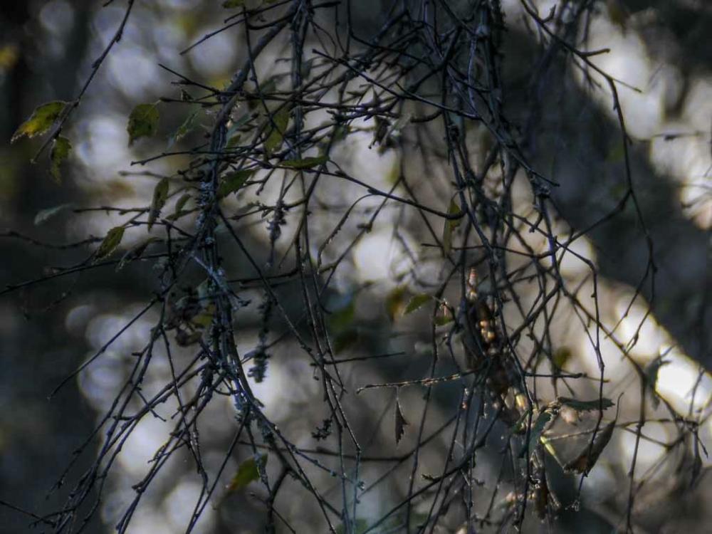 Photo of tree woods
