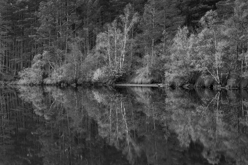 Trees at loch edge