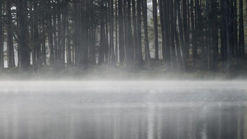 Mist on loch and trees
