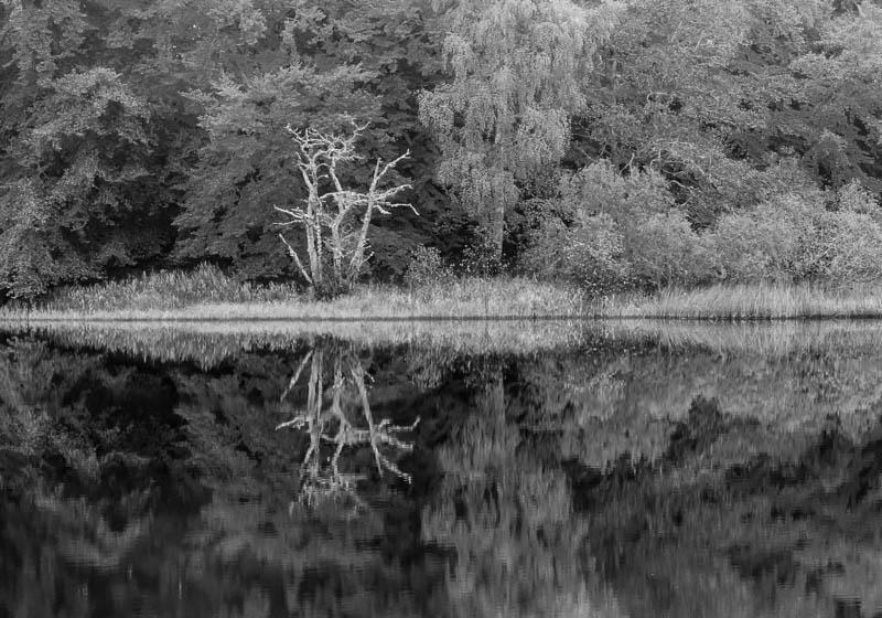 tree reflected in loch